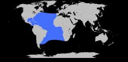 Marlin Verbreitungsgebiet