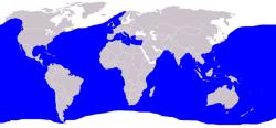 Verbreitungsgebiet Blauhai