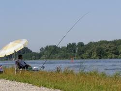 Angeln im Rhein