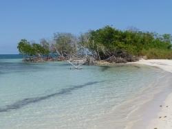 Mangrove sur l'île de Cayo Jutías (Cuba)