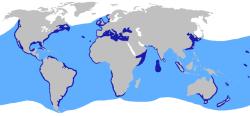 Verbreitungsgebiet Drescherhaie
