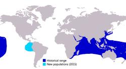 Giant Trevally Verbreitungsgebiet