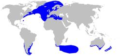 Verbreitungsgebiet Heringshai