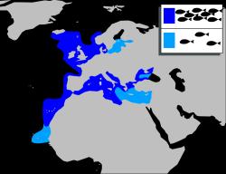 Meeräsche Verbreitungsgebiet